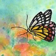 Song Of Joy - Butterfly Art Print