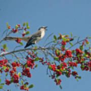 Song Of The Mockingbird Art Print