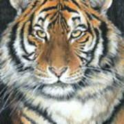 Songha Art Print