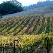 Sonoma County Vineyards Near Healdsburg Art Print