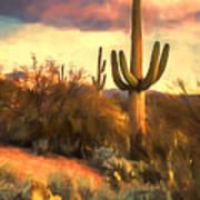 Sonoran Desert Morn Art Print