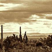 Sonoran Desert Mountains And Cactus Near Phoenix Art Print