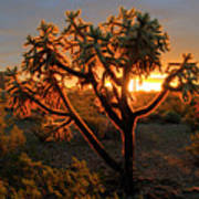 Sonoran Desert Sunrise 2 Art Print
