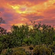 Sonoran Desert Sunset H44 Art Print