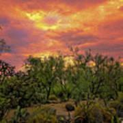 Sonoran Desert Sunset Op46 Art Print