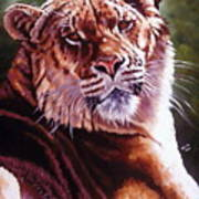 Sophie The Liger Art Print