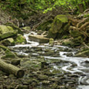 Sounds Of A Mountain Stream Art Print