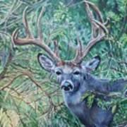 South Texas Deer In Thick Brush Art Print