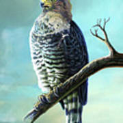 Southern Banded Snake Eagle Art Print
