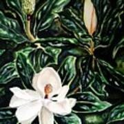 Southern Magnolia Bud And Bloom Art Print