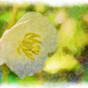Southern Missouri Wildflowers - Mayapples Bloom - Digital Paint 2 Art Print