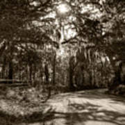 Southern Oak Shadows Art Print