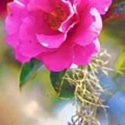 Southern Rose Art Print