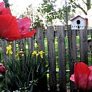 Southside Poppy Garden Art Print