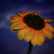 Southwest Sunflower Art Print