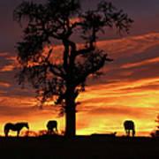 Southwestern Sunrise Color, Silhouetted Oak Tree And Three Horses Art Print