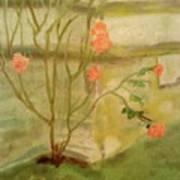 Southwick Hall Rose Art Print