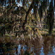 Spainsh Moss Hanging Over Pond On Middleton Place Art Print