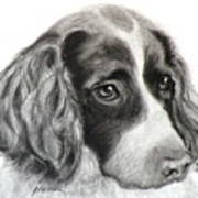 Spaniel Drawing Art Print