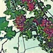 Spanish Grapes Art Print