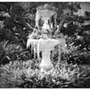 Spanish Moss Fountain With Bromeliads - Black And White Art Print