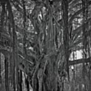 Spanish Moss Of The Tree Art Print