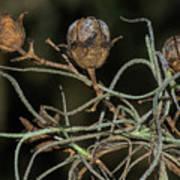 Spanish Moss On Azalea  Art Print