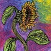 Spanish Sunflower Art Print