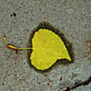Spared Heart And Its All Yellow Art Print