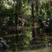 Sparkling Swamp Art Print