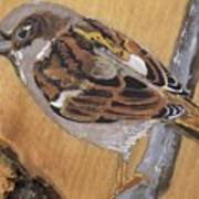 Sparrow 1 Art Print
