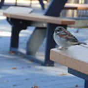Sparrow 2 Art Print
