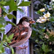 Sparrow In The Shrubs Art Print