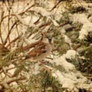 Sparrow In Winter Iv - Textured Art Print