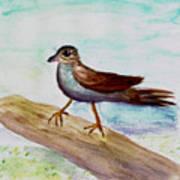 Sparrow On A Branch Art Print