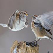 Sparrows Fight Art Print