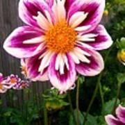 Special Flower Art Print