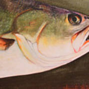 Speckled Trout Art Print by Amanda Ladner