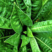 Spectacular Green Foliage Art Print