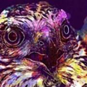 Sperber Raptor Plumage Bird Of Prey  Art Print