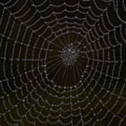 Spider Cobweb  Art Print