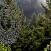Spider Web Overlook Art Print