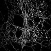 Spiderweb No 4 Art Print