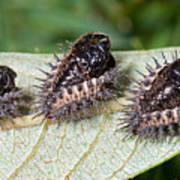 Spiky Beetle Cases Art Print