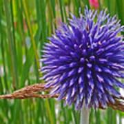 Spiky Blue Art Print