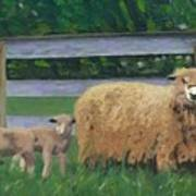 Sping Lambs Art Print