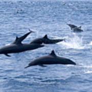 Spinner Dolphins Art Print