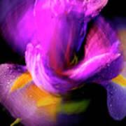 Spinning Iris Art Print