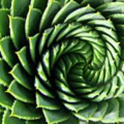 Spiral Plant Art Print