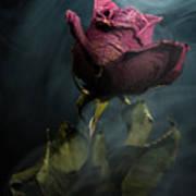 Spirit Of A Dying Rose Art Print